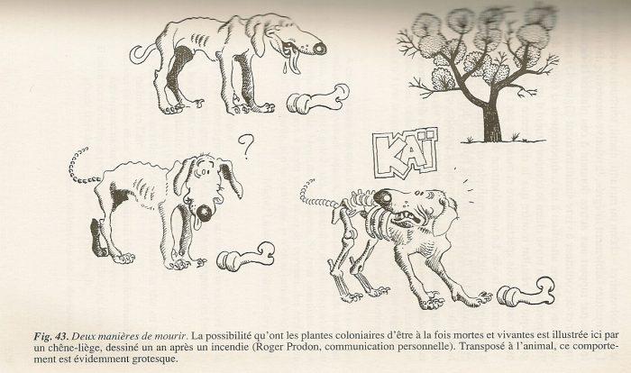 individu plante-animal