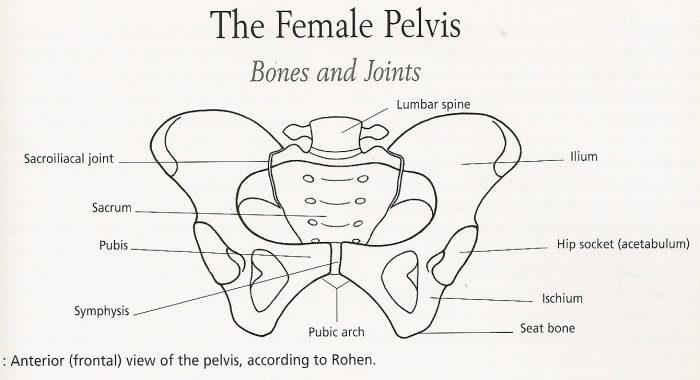 pelvicbone